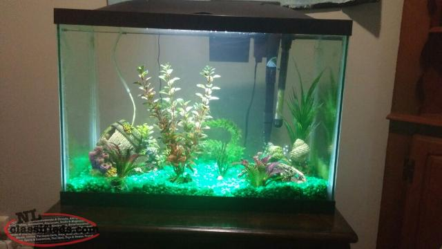 20 gallon fish tank for sale cbs newfoundland for 10 gallon fish tank for sale