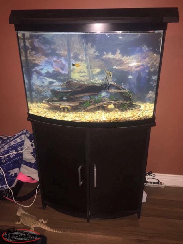 36 Gallon Fish Tank Conception Bay South Newfoundland