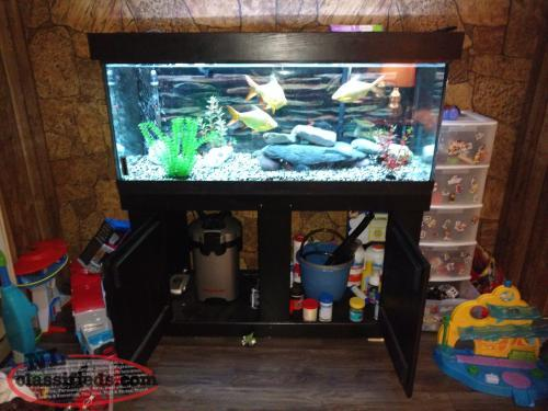 Fish tank set up everything in stand included portugal for Fish tank set up